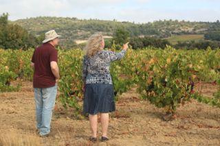 Inspecter les vignes