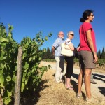 2016 a very hot and dry year for their vines - Chateau La Baronne